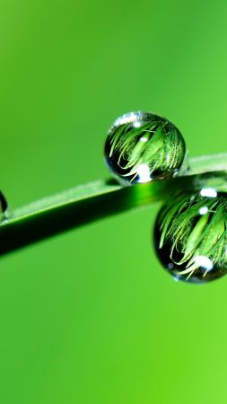 drops, grass, green, 4k (vertical)