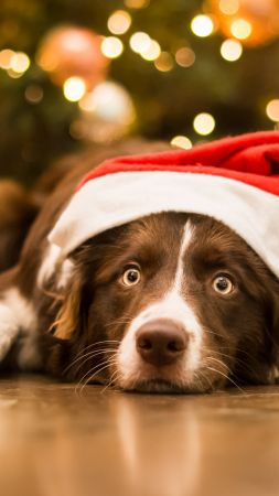 Christmas, New Year, dog, cute animals, 5k (vertical)