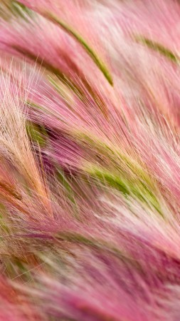 ears, 5k, 4k wallpaper, 8k, wind, pink, wheat, OSX (vertical)