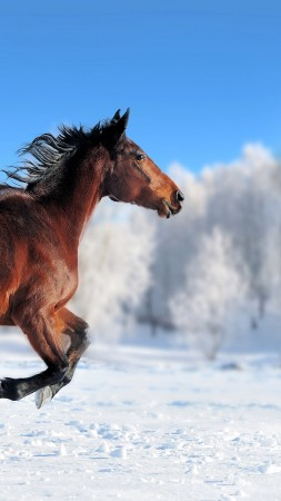 horse, cute animals, snow, winter, 4k (vertical)