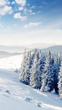mountains, forest, trees, snow, winter, 4k (vertical)