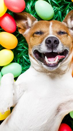 Easter, eggs, dog, 5k (vertical)