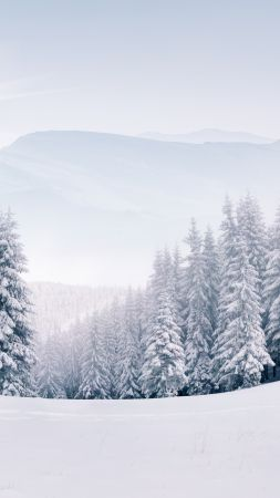 forest, snow, winter, 5k (vertical)