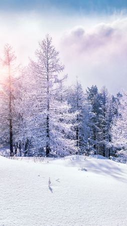 forest, snow, winter, clouds, 8k (vertical)