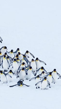 penguins, snow, winter, 4k (vertical)