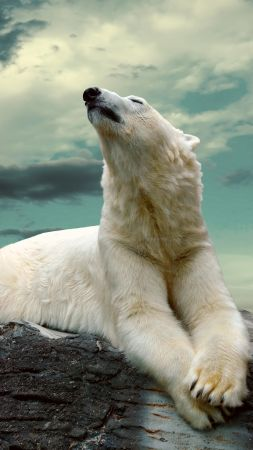 polar bear, cute animals, sky, clouds, 8k (vertical)