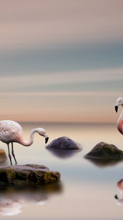 flamingo, bird, ocean, 5k (vertical)