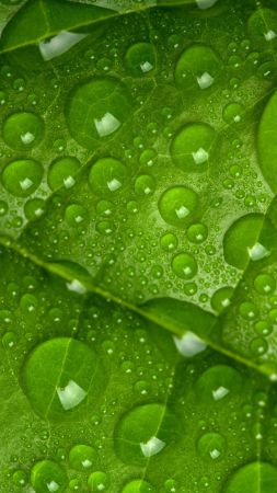 leaf, drops, green, 4k (vertical)