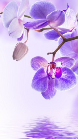 orchid, flower, 4k (vertical)