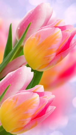 flowers, tulips, 4k (vertical)
