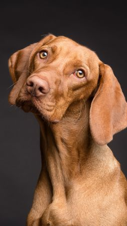 Dog, funny animals, 4K (vertical)