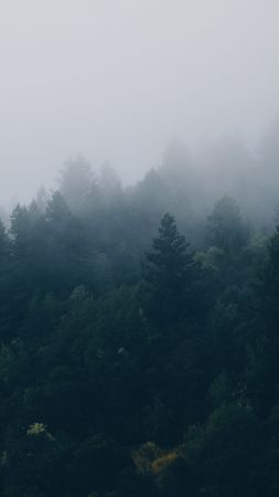 Get Foggy Forest Screensaver Wallpapers