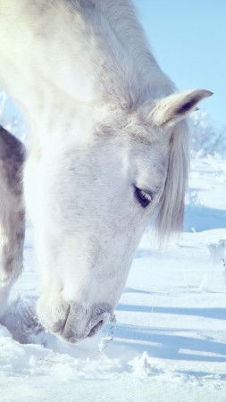 Horse, hooves, mane, white, snow, winter, close (vertical)
