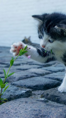 Kitten, funny animals, flower, 4K (vertical)