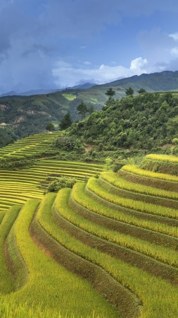Rice Terrace, China, 5K (vertical)