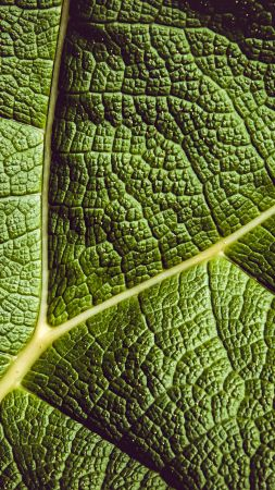 leaf, green, 5K (vertical)