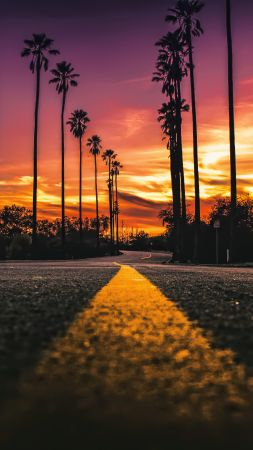 Los Angeles, California, road, palms, sunset, 4K (vertical)