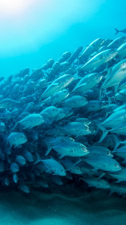 fish, underwater, diving, sea, ocean, 5K (vertical)