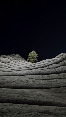 iOS 14.2, Desert, Tree, Night, 4K (vertical)