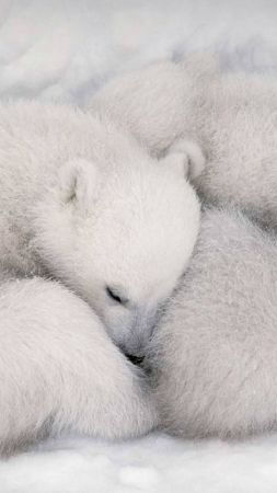 white bear, white, bear, cute animals, HD (vertical)