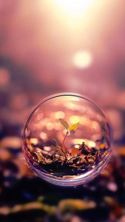 sphere, 4k, HD wallpaper, background, sunset, transparent, plant (vertical)