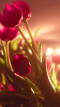 tulips, 4k, HD wallpaper, red, Valentine's Day, February 14 (vertical)