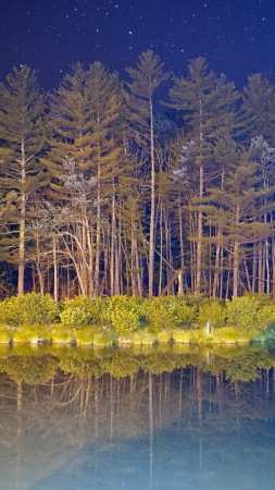 android, 5k, 4k wallpaper, forest, landscape, night, pond (vertical)