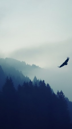 forest, fog, eagle, landscape, wallpaper