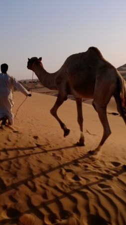 camel in desert, arabian caravan, Arabian Nights Village, Nokia Lumia test, Abu Dhabi tourism (vertical)