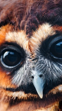 Owl, 5k, 4k wallpaper, National Geographic, Eyes, Wild, funny (vertical)