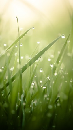 Grass, green, drops, dew, sun, rays