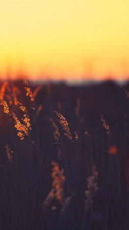 Field, 5k, 4k wallpaper, HD, sunset, grass (vertical)