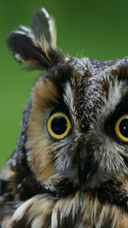 Owl, eagle-owl, funny, nature, plumy (vertical)