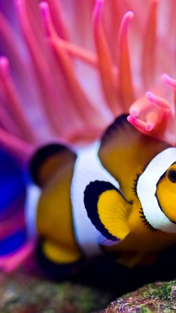 Clownfish, diving, Red sea, coral, World's best diving sites, deep sea creatures (vertical)
