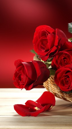 Roses, 5k, 4k wallpaper, Flower bouquet, red (vertical)
