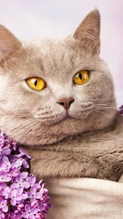British cat, cute animals, lilac (vertical)