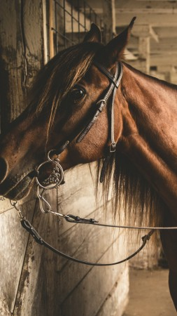 Horse, stable, brown, cute animals (vertical)