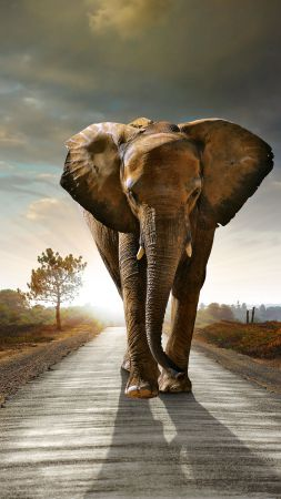 Elephant, sunset, road, nature (vertical)