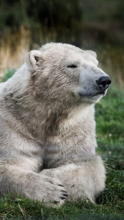 Polar bear, look, cute animals (vertical)