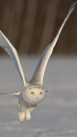 Owl, cute animals, funny, flight (vertical)