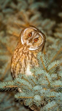 Owl, cute animals, funny (vertical)