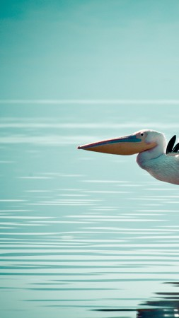 Pelican, flight, ocean, sea (vertical)