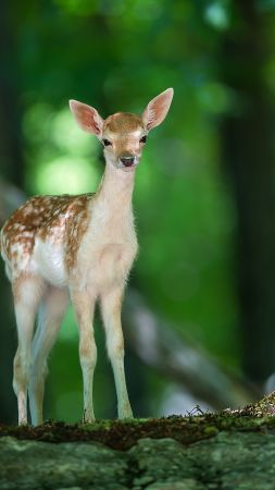 Deer, cute animals, forest (vertical)