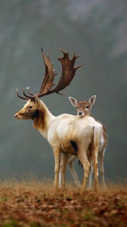 Deer, meadow, fog, cute animals (vertical)