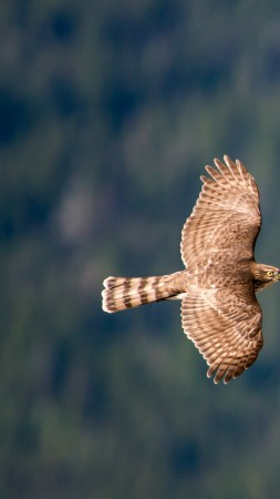 hawk, flight, air photography (vertical)