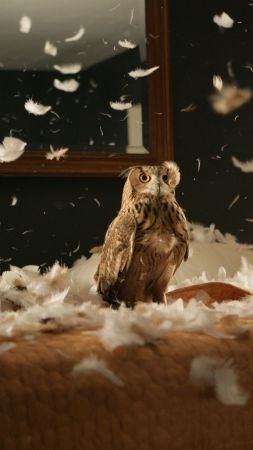 Owl, feathers, cute animals, funny (vertical)