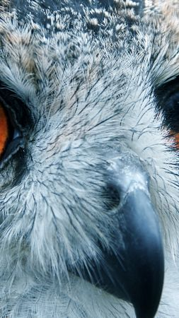 Owl, look, eyes, macro (vertical)