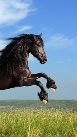 Horse, gallop, meadow, sky (vertical)