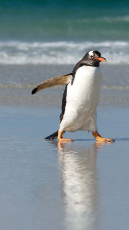 Pinguin, shore, sea, ocean, cute animals (vertical)