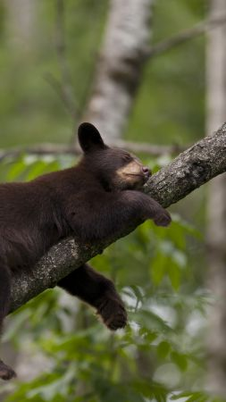 Brown bear, bear, tree, cute animals, funny (vertical)